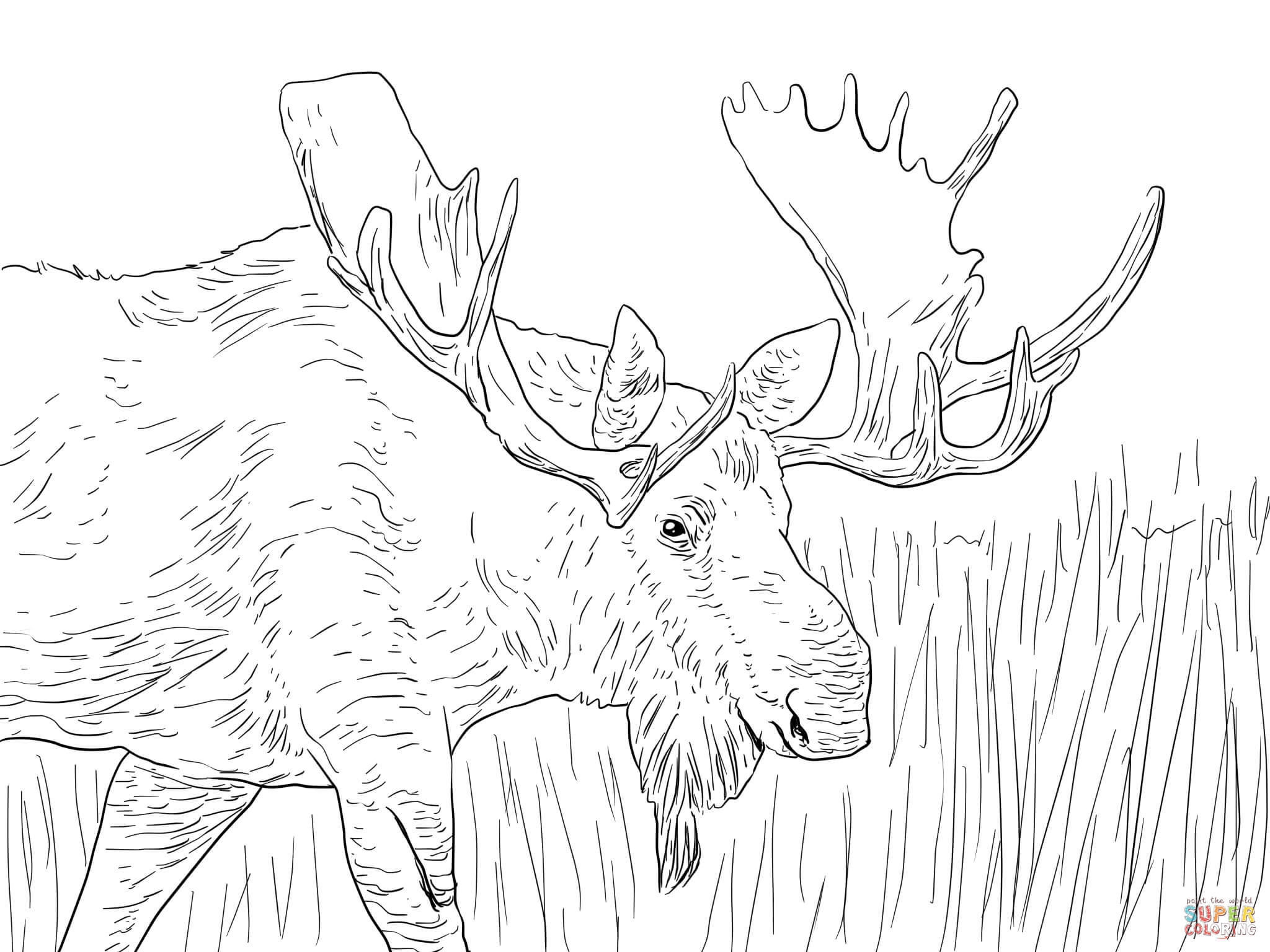 moose coloring pages moose coloring pages for kids at getdrawings free download pages coloring moose