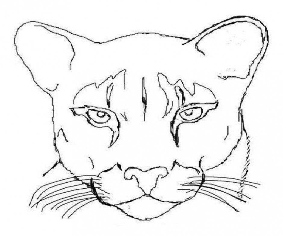 mountain lion coloring pages coloring pages fun facts art clip art panther cat mountain lion coloring pages