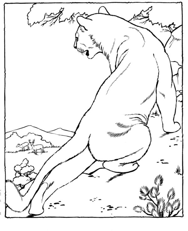 mountain lion coloring pages download mountain lion coloring for free designlooter coloring lion mountain pages