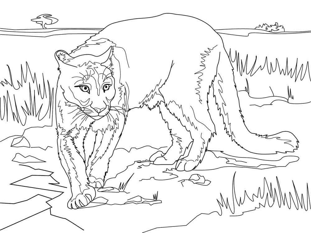 mountain lion coloring pages get this mountain lion coloring pages printable 75997 lion coloring mountain pages