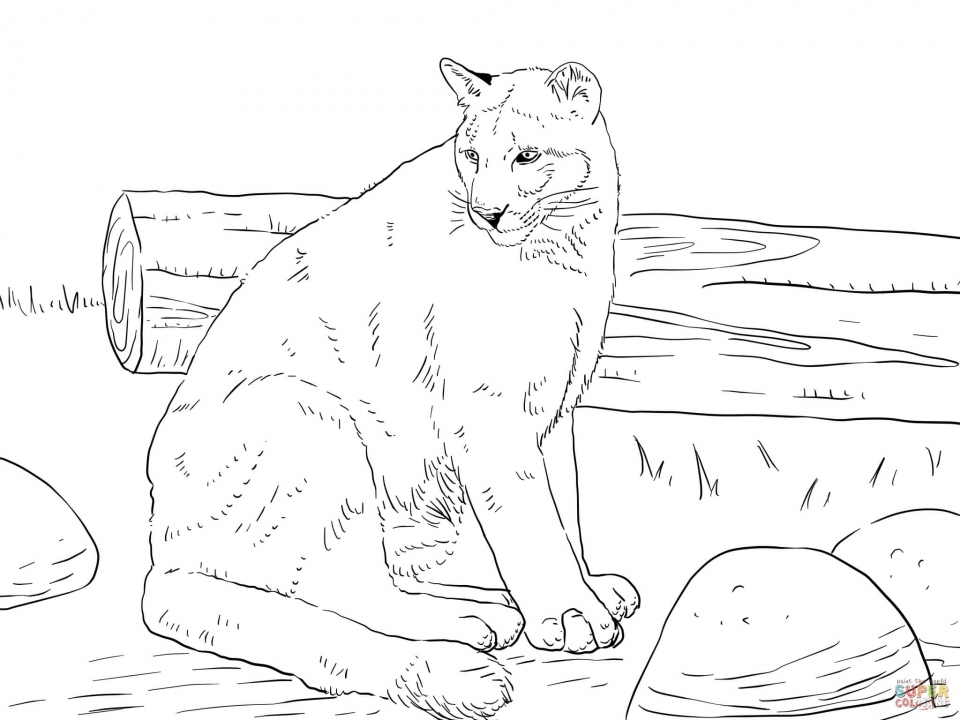mountain lion coloring pages mountain lion coloring page with images lion coloring mountain coloring pages lion