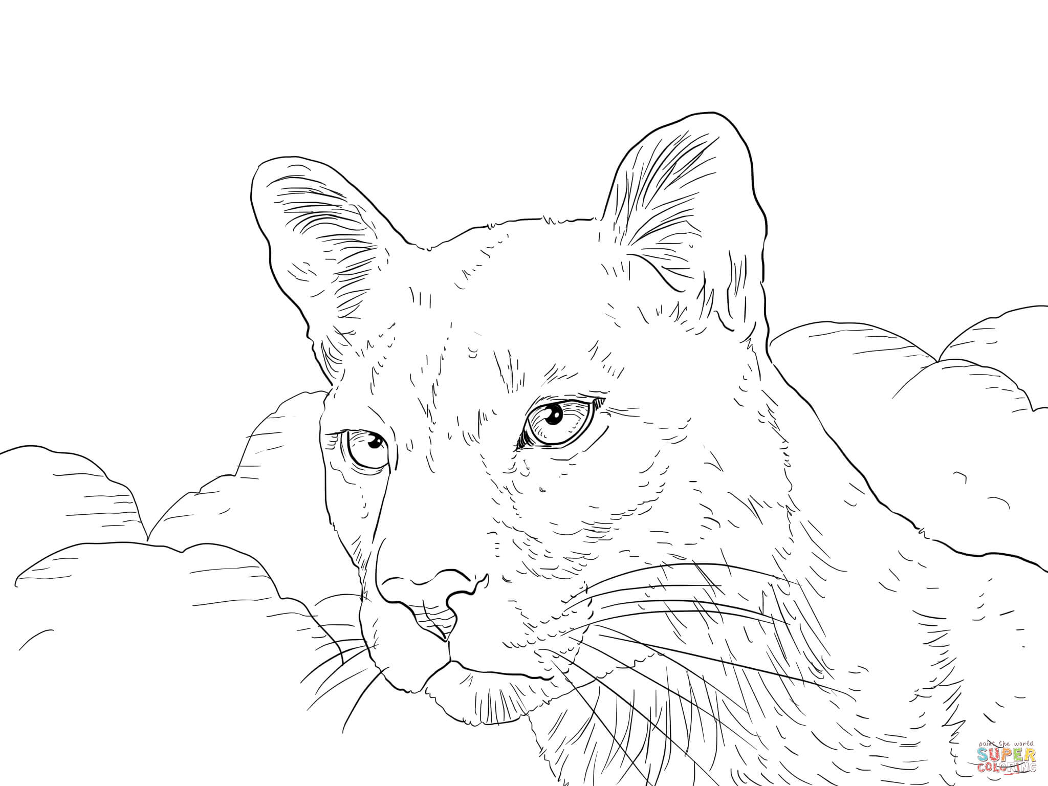 mountain lion coloring pages mountain lion coloring pages getcoloringpagescom mountain lion pages coloring