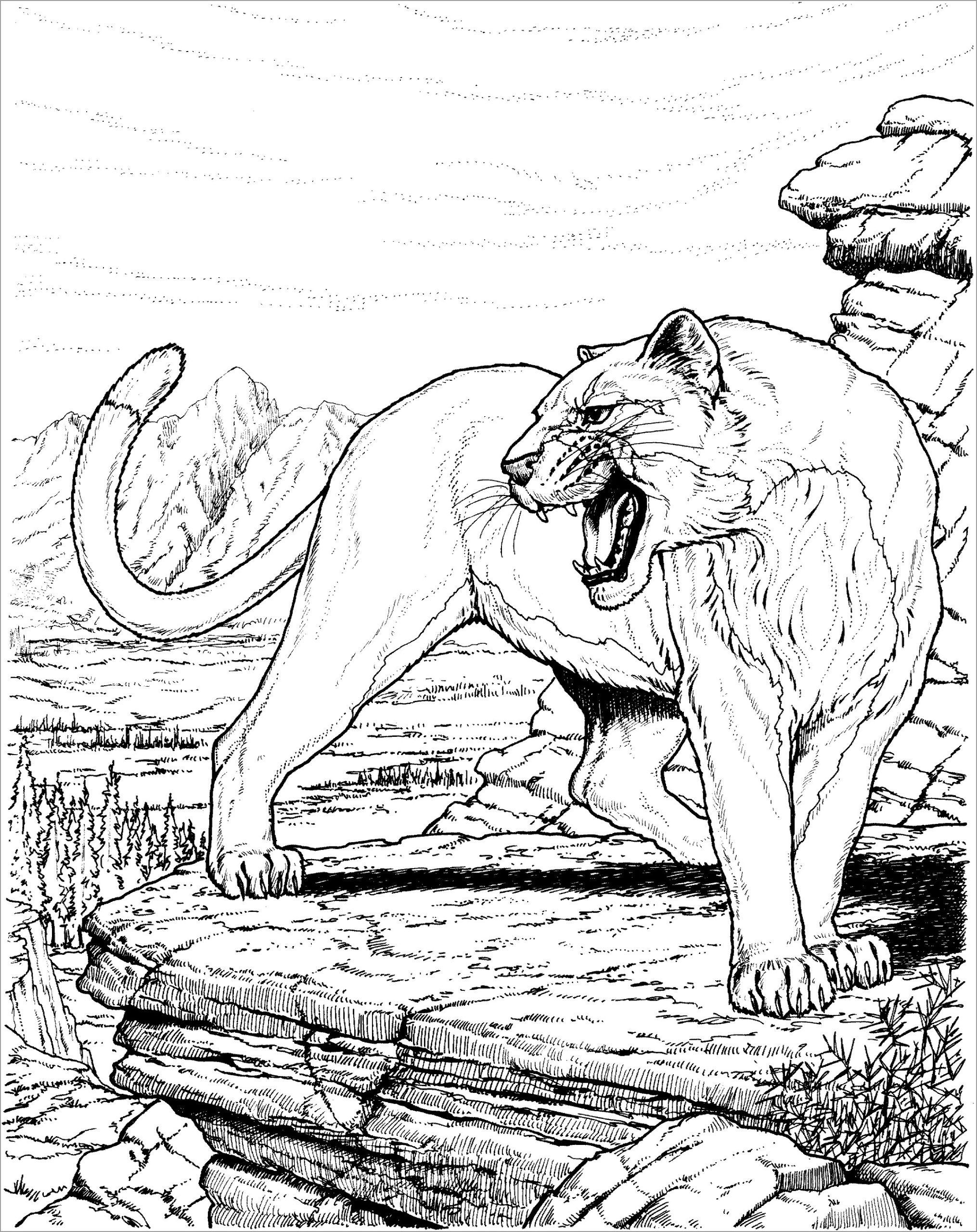 mountain lion coloring pages mountain lion coloring pages kidsuki coloring mountain pages lion