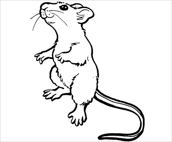 mouse colouring mouse outline drawing at getdrawings free download colouring mouse