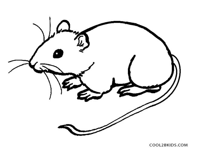 mouse picture for coloring mouse coloring page coloring for mouse picture