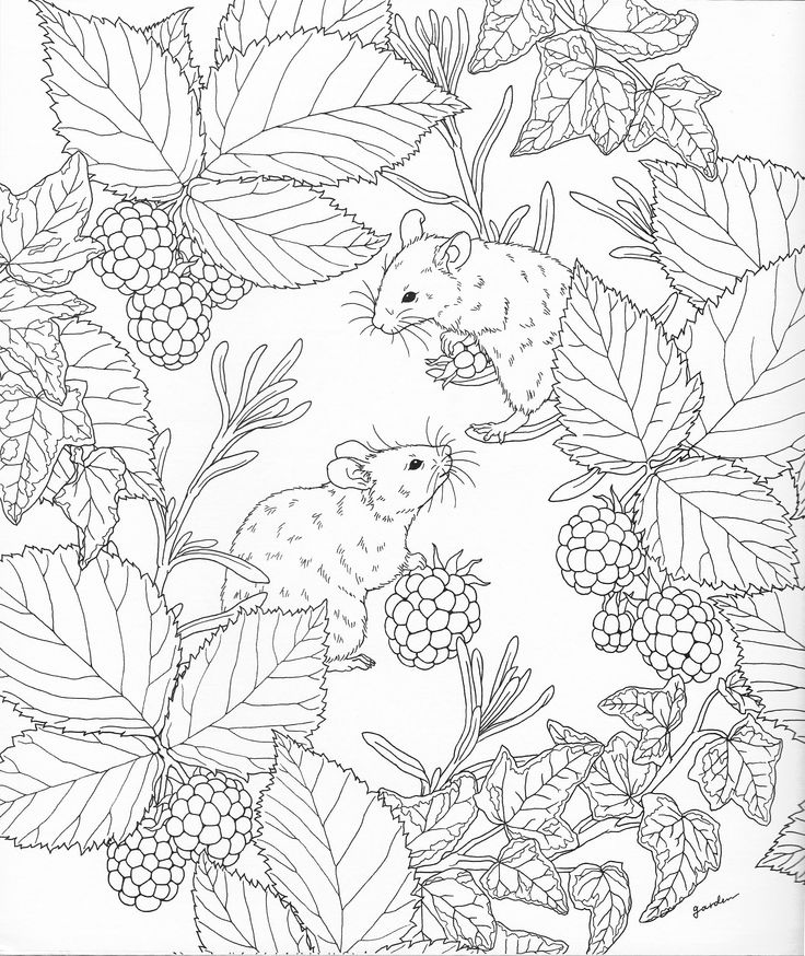 nature colouring pages nature scenes drawing at getdrawings free download pages colouring nature