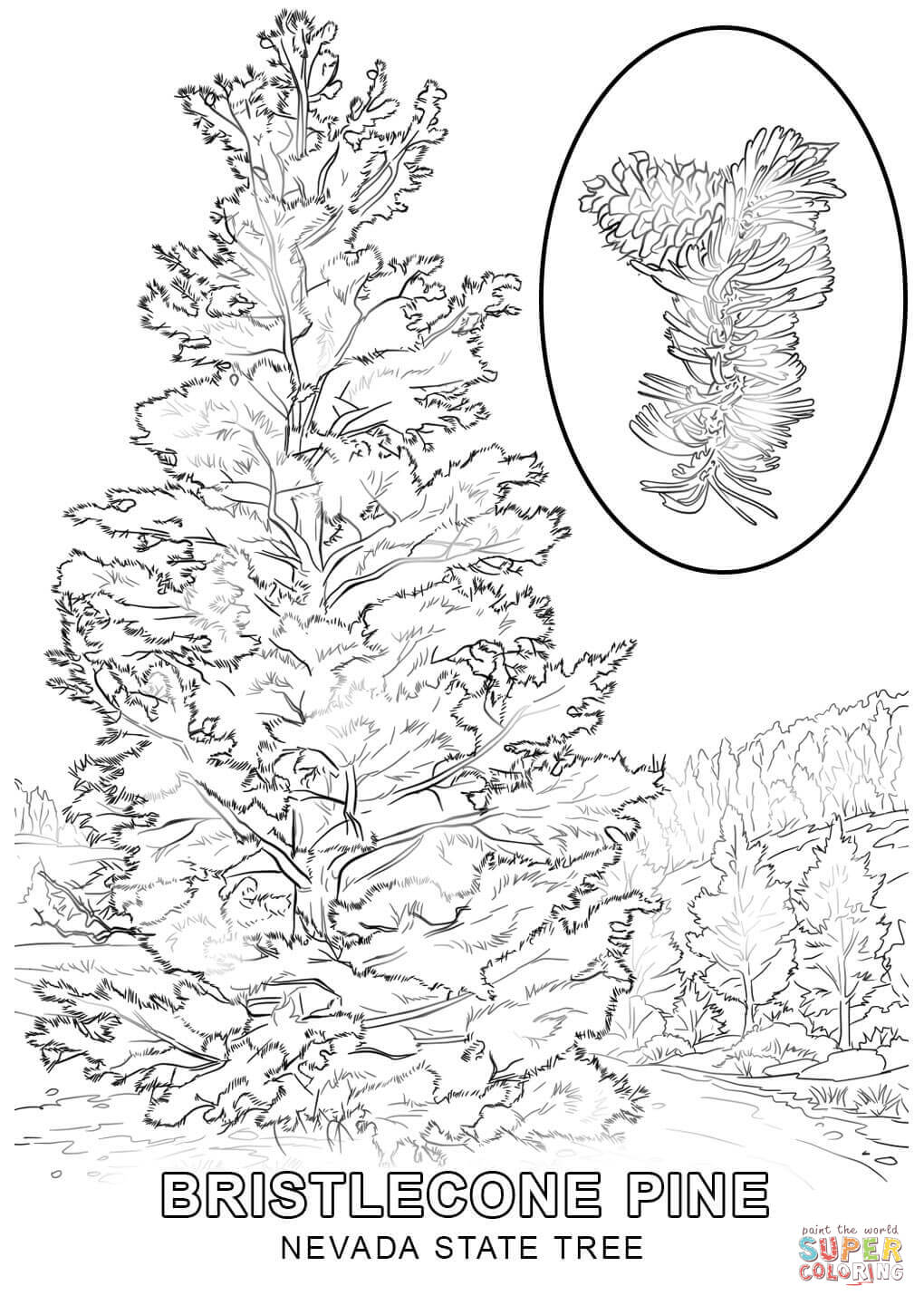 new jersey state tree maryland state tree coloring page free printable jersey state tree new
