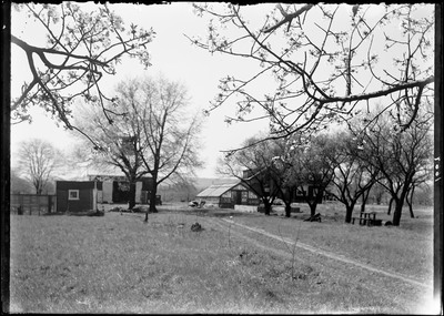 new jersey state tree quotcherry trees in the back yard of g french39s nj homequot by tree state new jersey