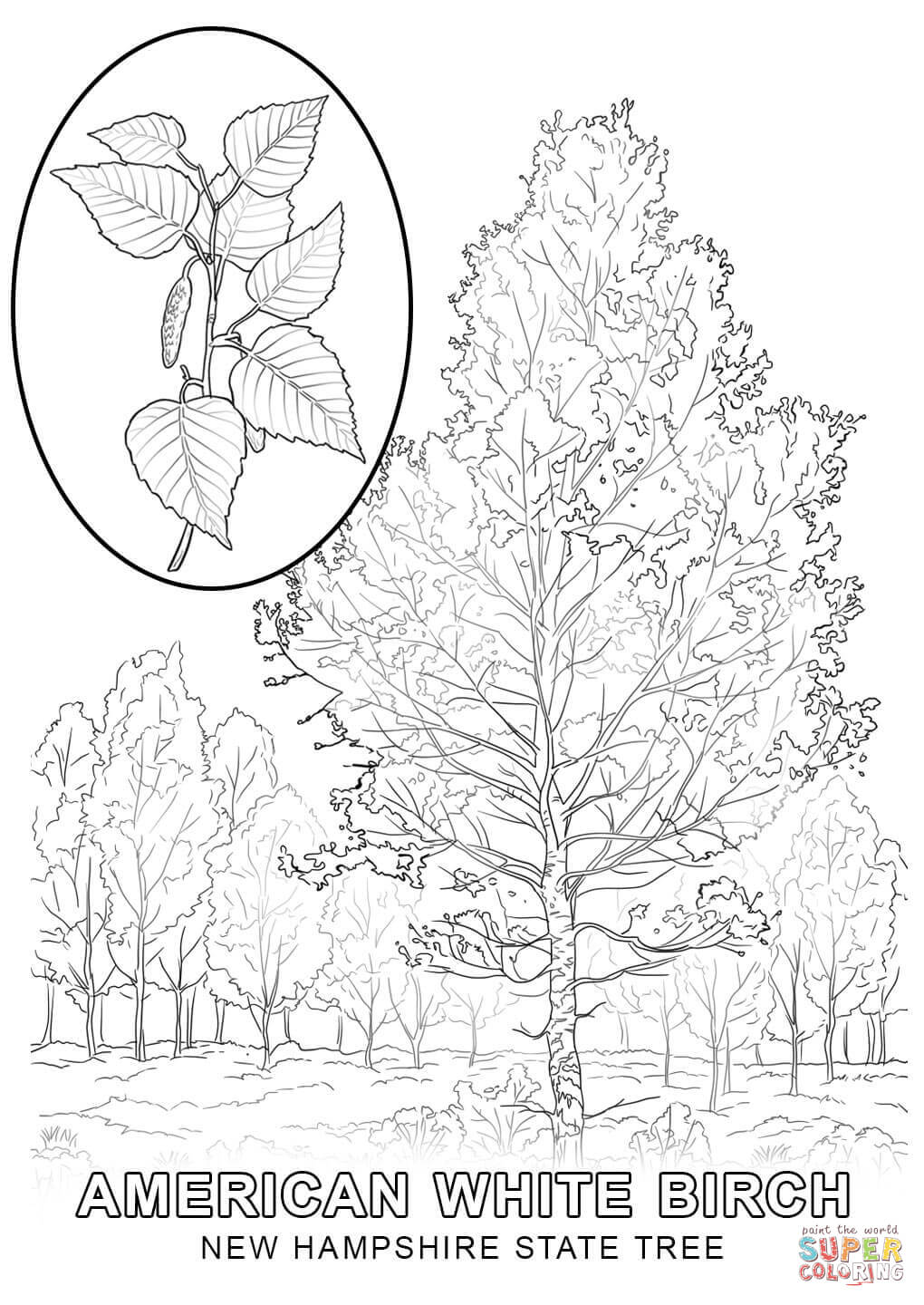 new jersey state tree texas state tree coloring page coloring pages jersey state new tree
