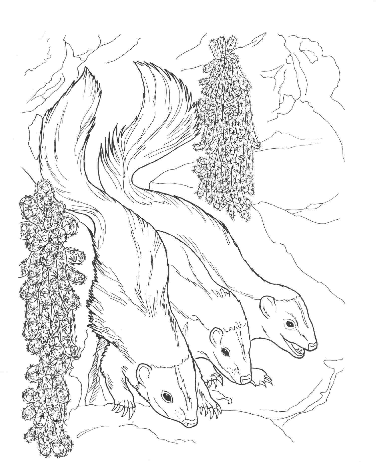 nocturnal animals coloring pages nocturnal animals printable coloring pages coloring pages pages animals nocturnal coloring