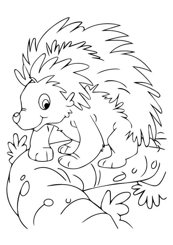 nocturnal animals coloring pages pictures of nocturnal animals coloring home coloring nocturnal animals pages 1 1
