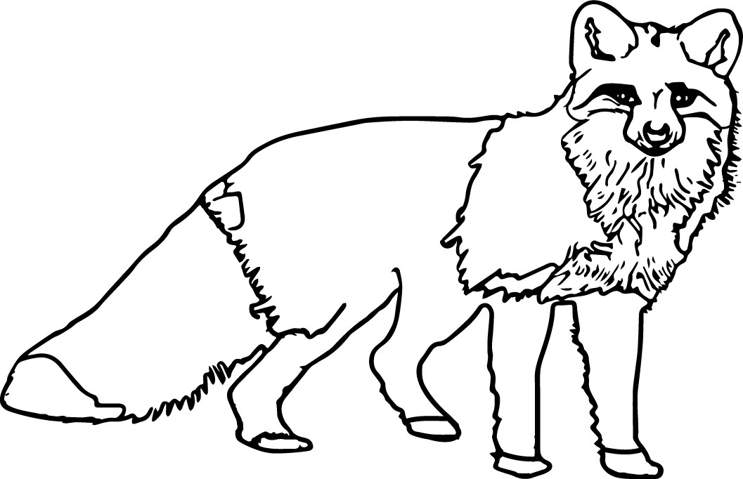 nocturnal animals coloring pages the best free nocturnal coloring page images download coloring animals nocturnal pages