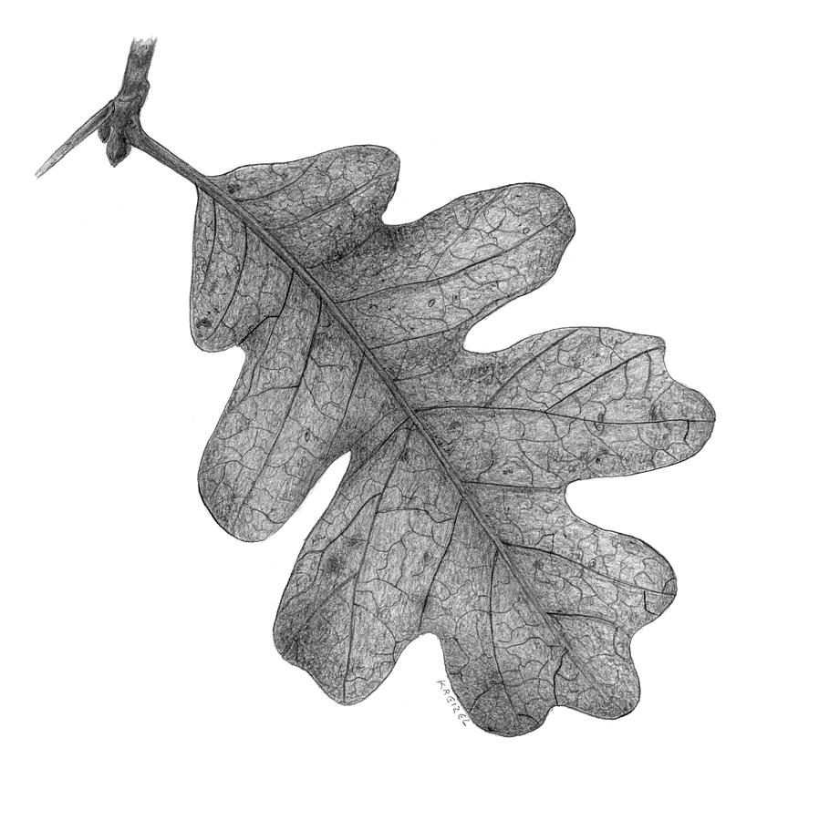 oak leaf drawings white oak leaf clipart etc leaf oak drawings
