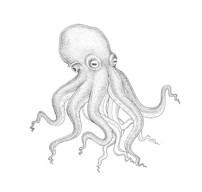 octupus drawing octupus drawing octupus drawing
