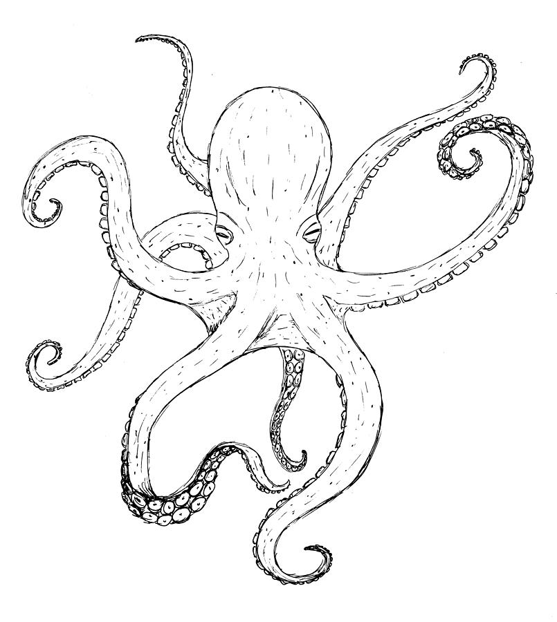 octupus drawing vintage octopus drawing at getdrawings free download octupus drawing