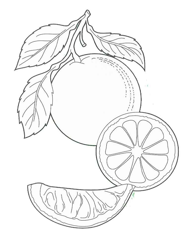 orange fruit coloring fruits coloring pages free coloring pages printable for coloring orange fruit