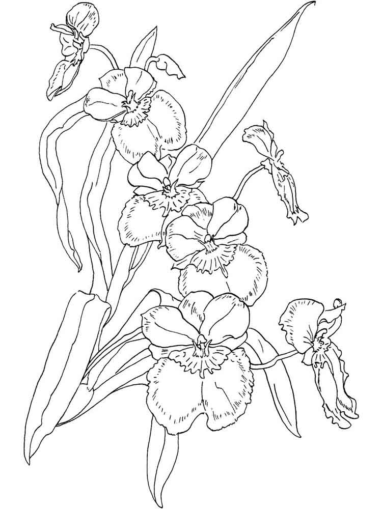 orchid coloring pages beautiful orchid coloring pages to print stpetefestorg orchid coloring pages