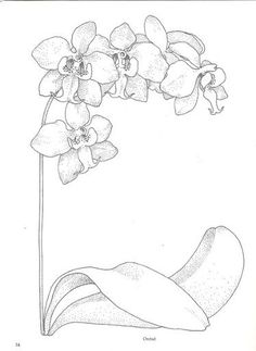 orchid coloring pages dahlia flower coloring pages download and print dahlia pages coloring orchid