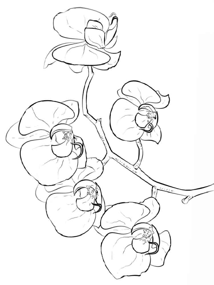 orchid coloring pages free printable flower coloring pages for kids best orchid pages coloring
