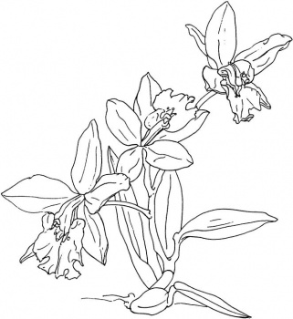 orchid coloring pages free printable flower coloring pages for kids pages coloring orchid