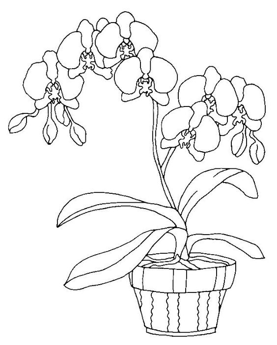 orchid coloring pages orchid coloring pages to download and print for free coloring pages orchid
