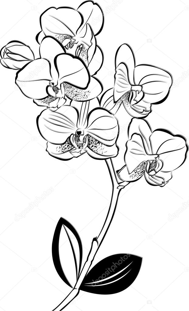 orchids drawings 85 best flowers drawings of orchids images on pinterest drawings orchids
