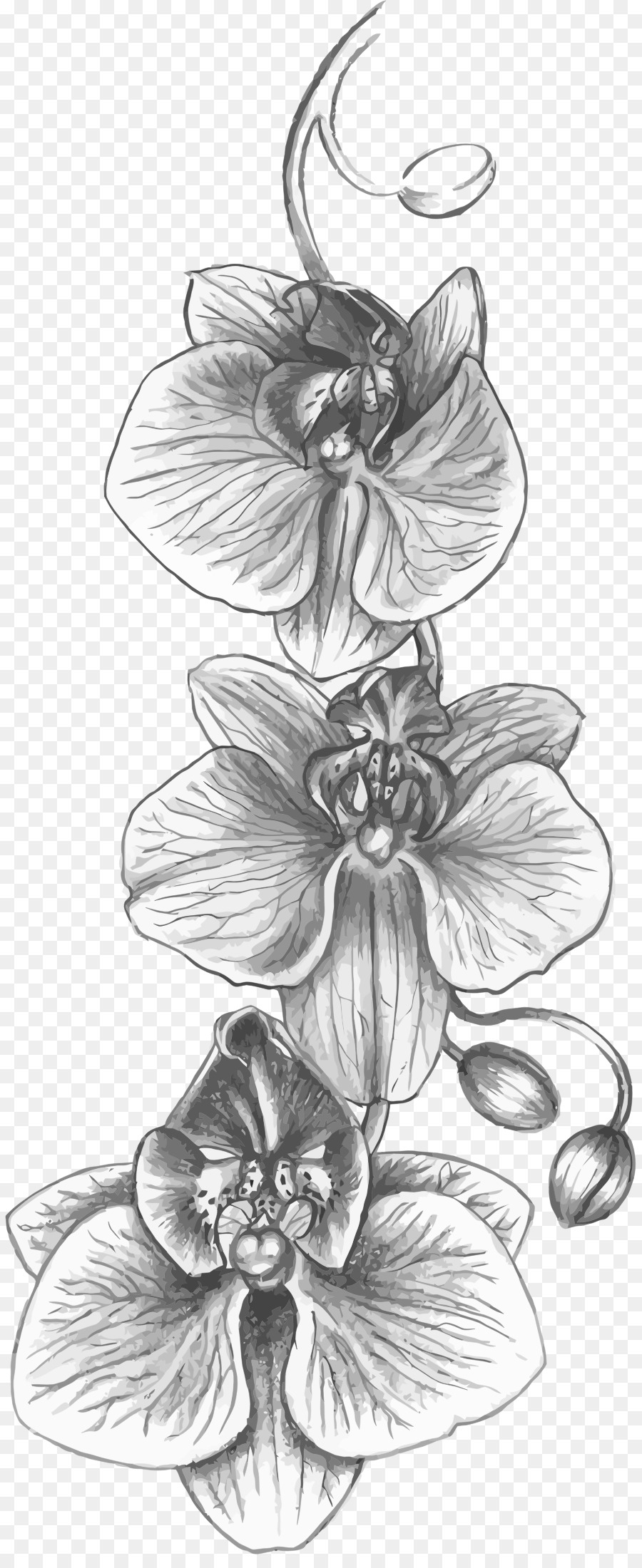 orchids drawings gousicteco orchid drawing easy images drawings orchids