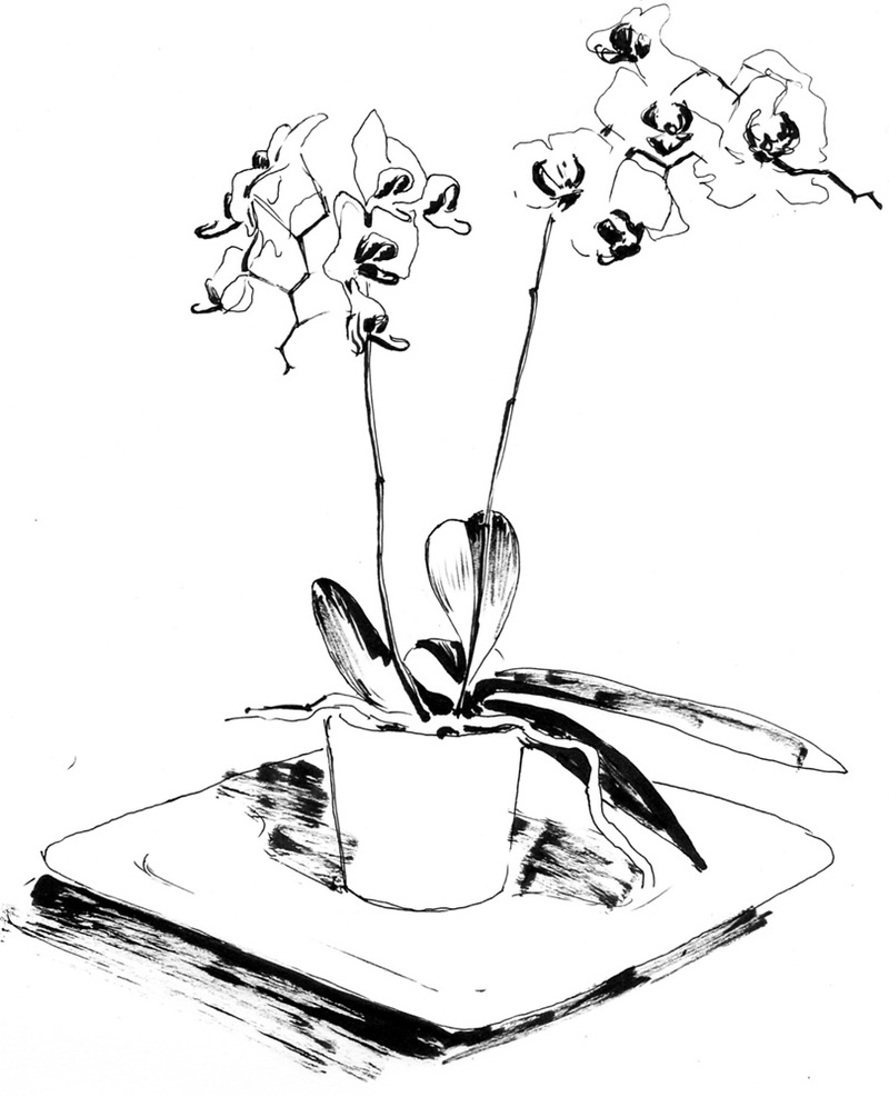 orchids drawings nap time orchid drawings by my aunt sarah orchids drawings