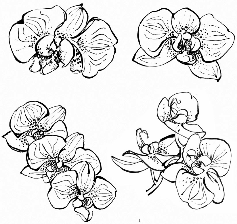orchids drawings orchid drawing by bill finewood orchids drawings