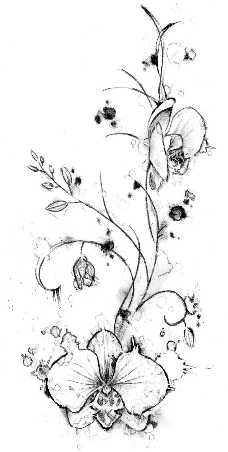 orchids drawings orchid drawing by laura teti orchids drawings