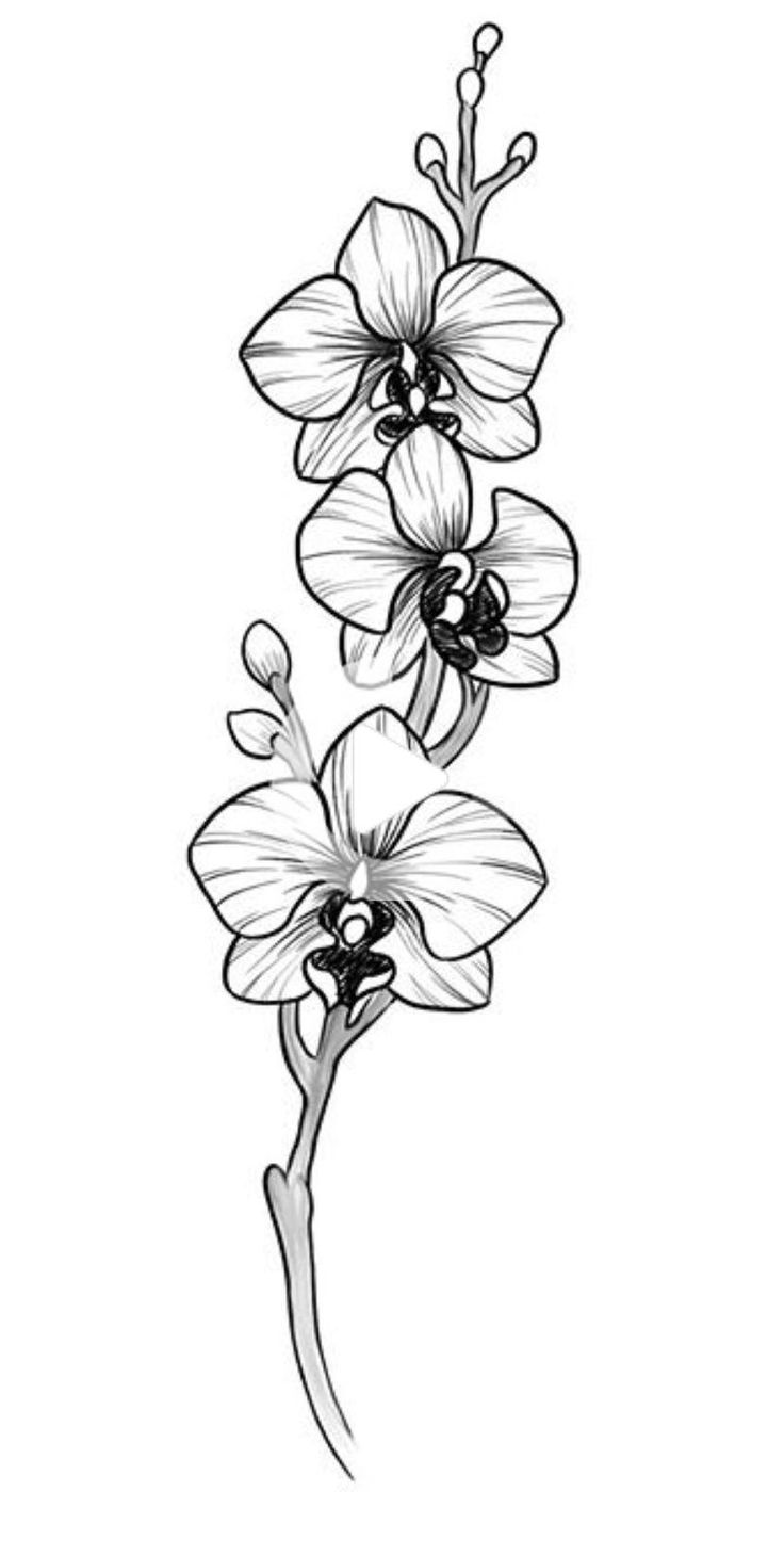 orchids drawings orchid drawing outline at getdrawings free download drawings orchids