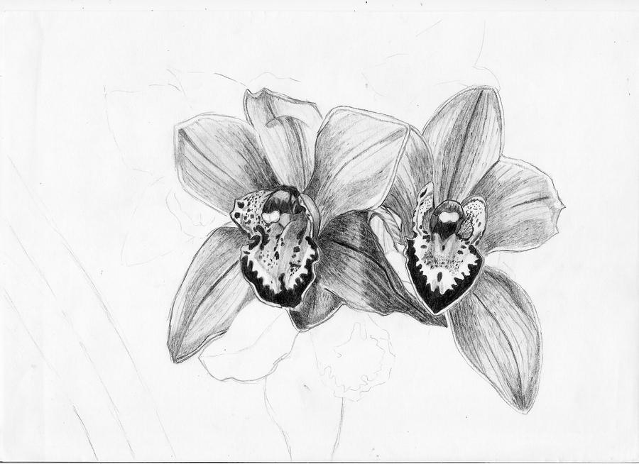 orchids drawings orchid drawing outline at getdrawings free download drawings orchids 1 1