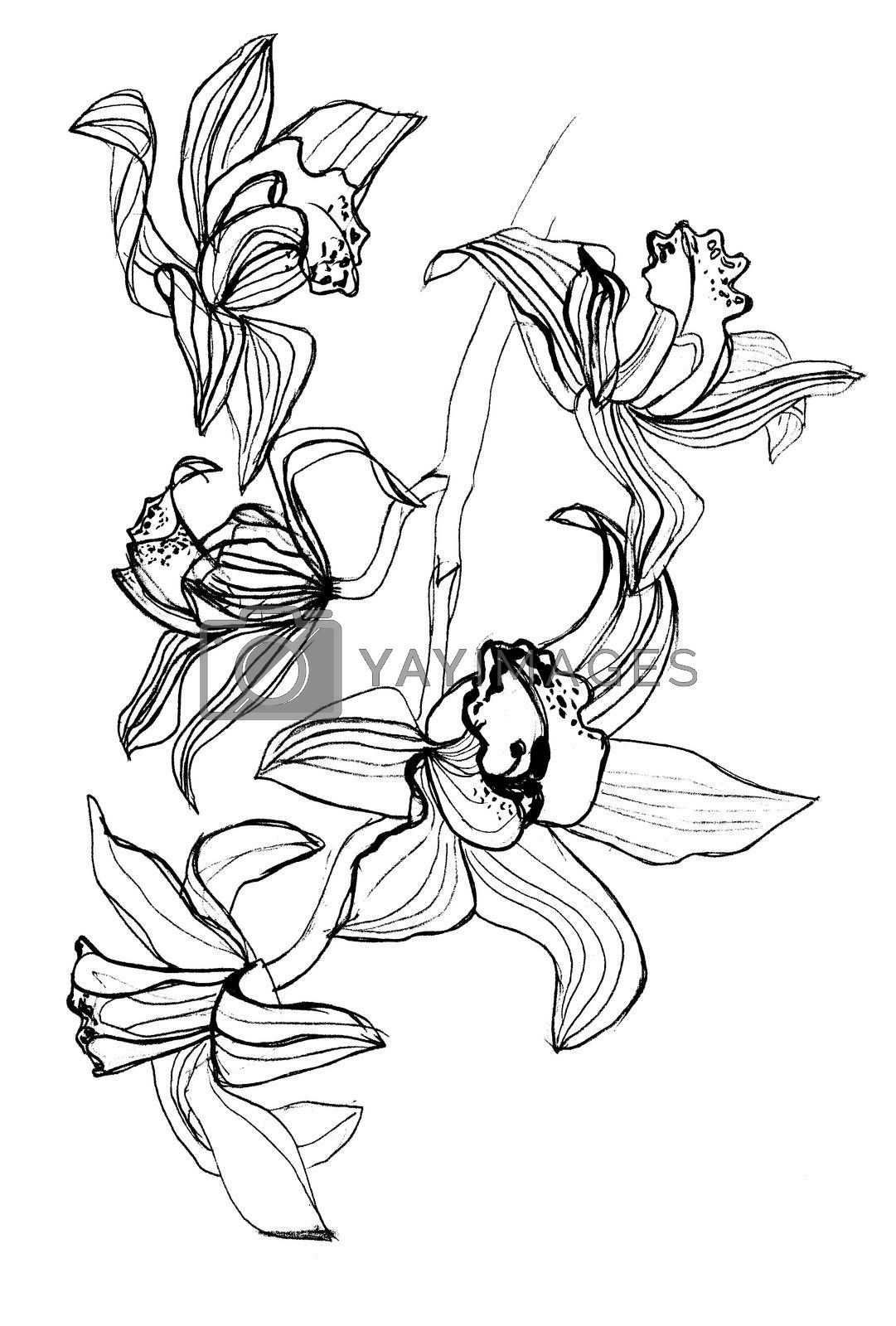 orchids drawings orchid flower drawing in pencil at paintingvalleycom drawings orchids