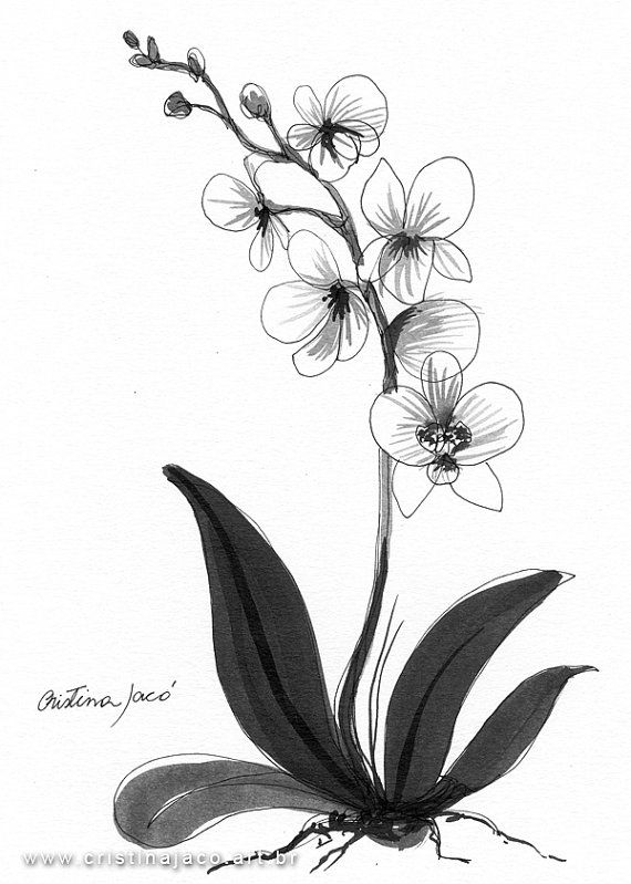 orchids drawings orchid flower sketch at paintingvalleycom explore drawings orchids