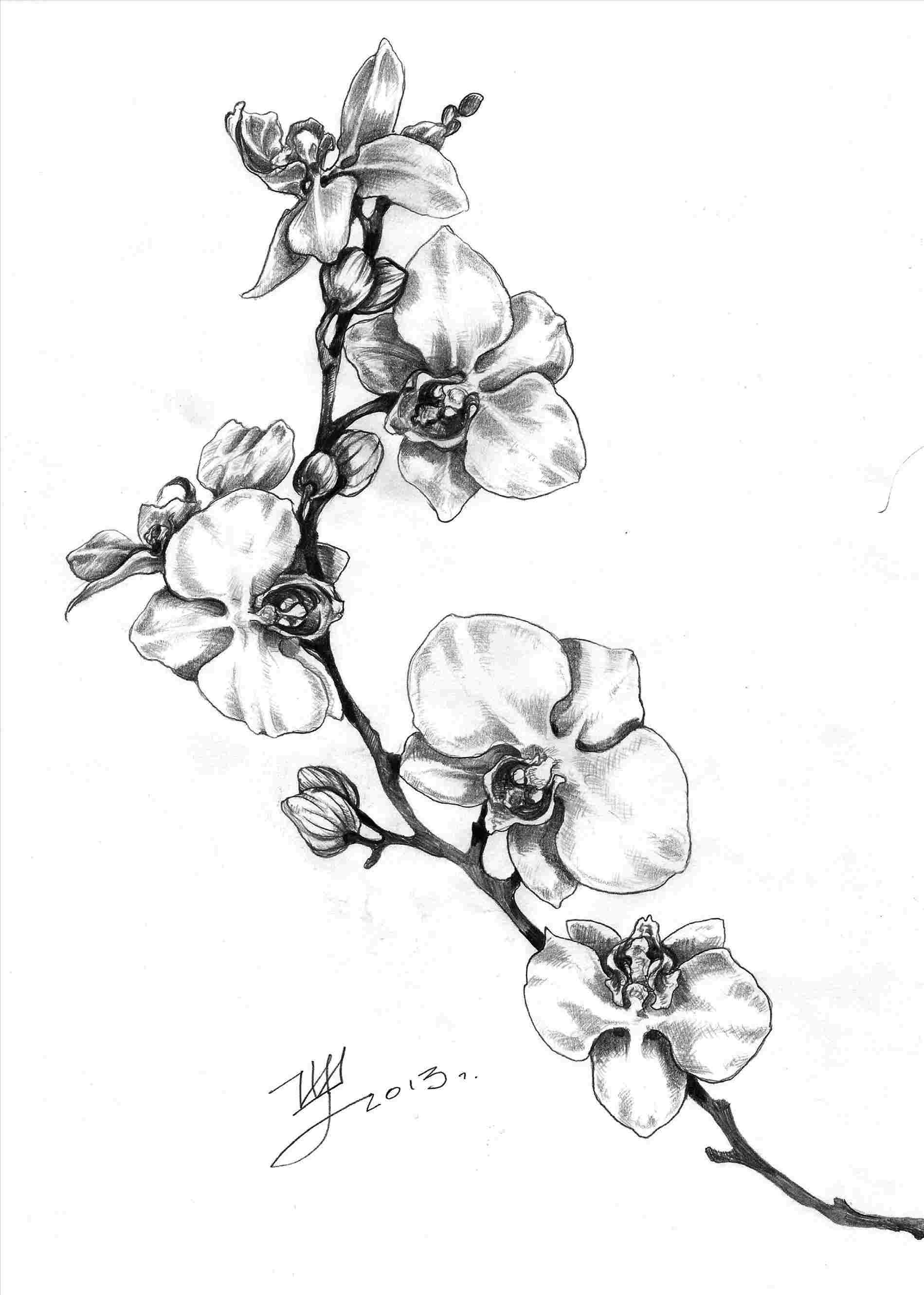 orchids drawings orchid flower tattoos garden design in 2020 orchid orchids drawings