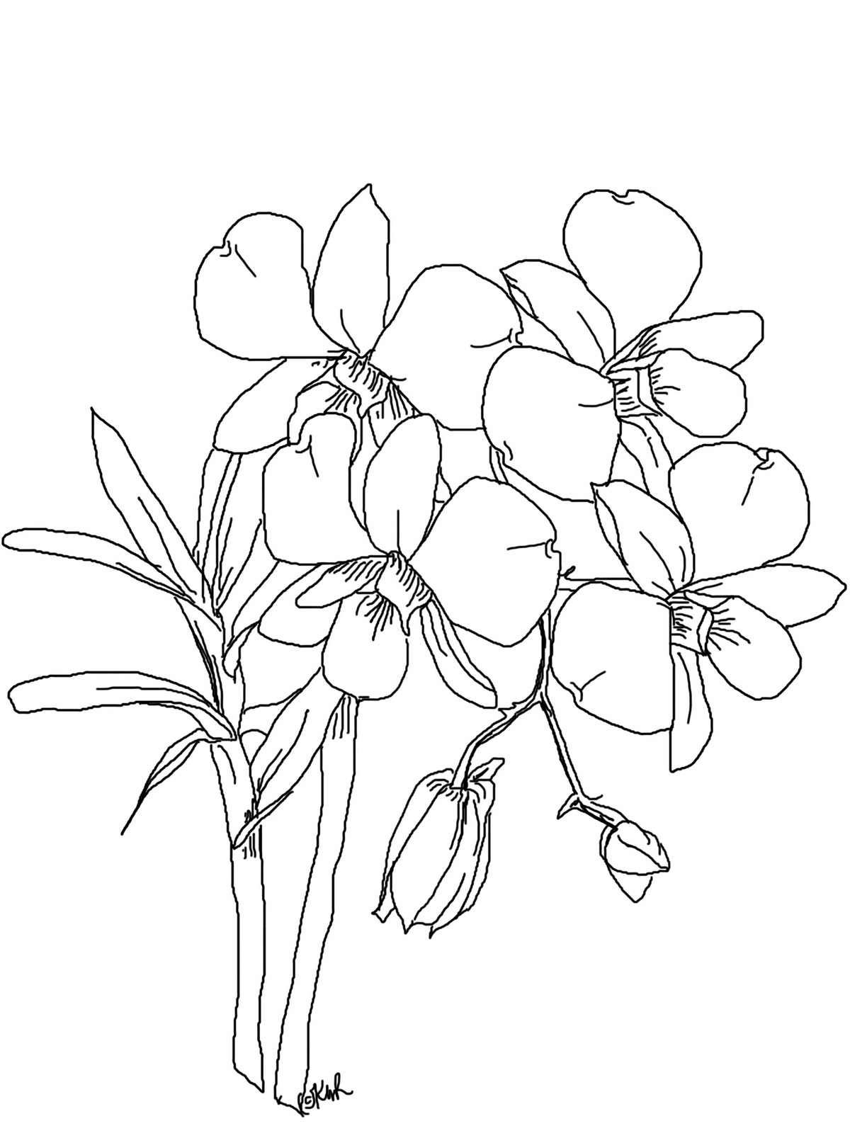 orchids drawings orchid line drawing at getdrawings free download drawings orchids