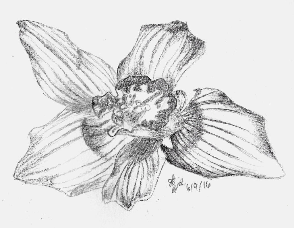 orchids drawings orchids drawing at getdrawings free download orchids drawings