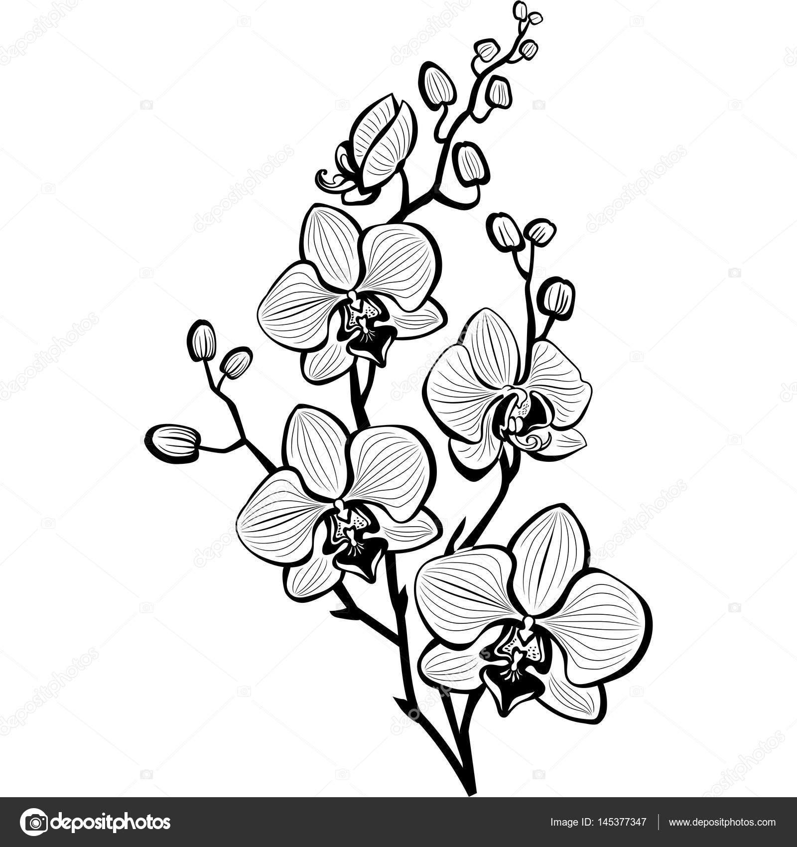 orchids drawings purple orchid drawing at getdrawings free download drawings orchids