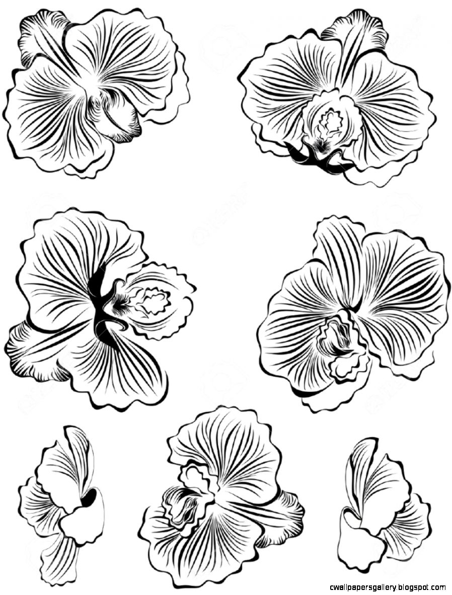 orchids drawings purple orchid drawing at getdrawings free download orchids drawings