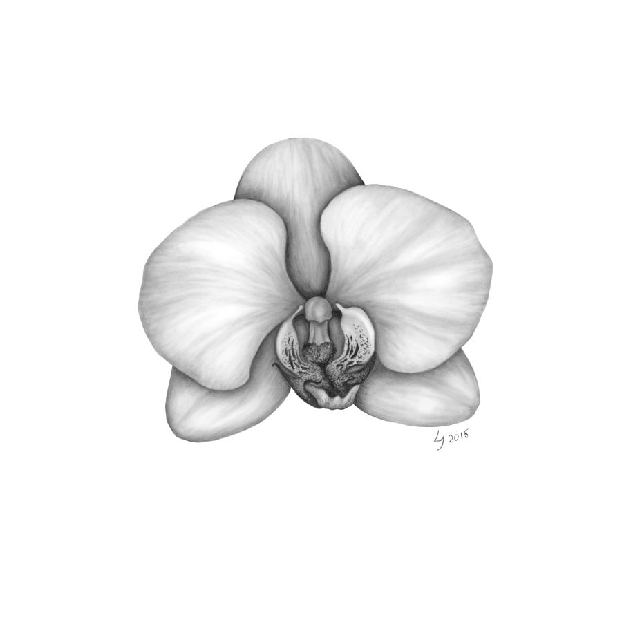 orchids drawings simple orchid drawing at getdrawings free download orchids drawings