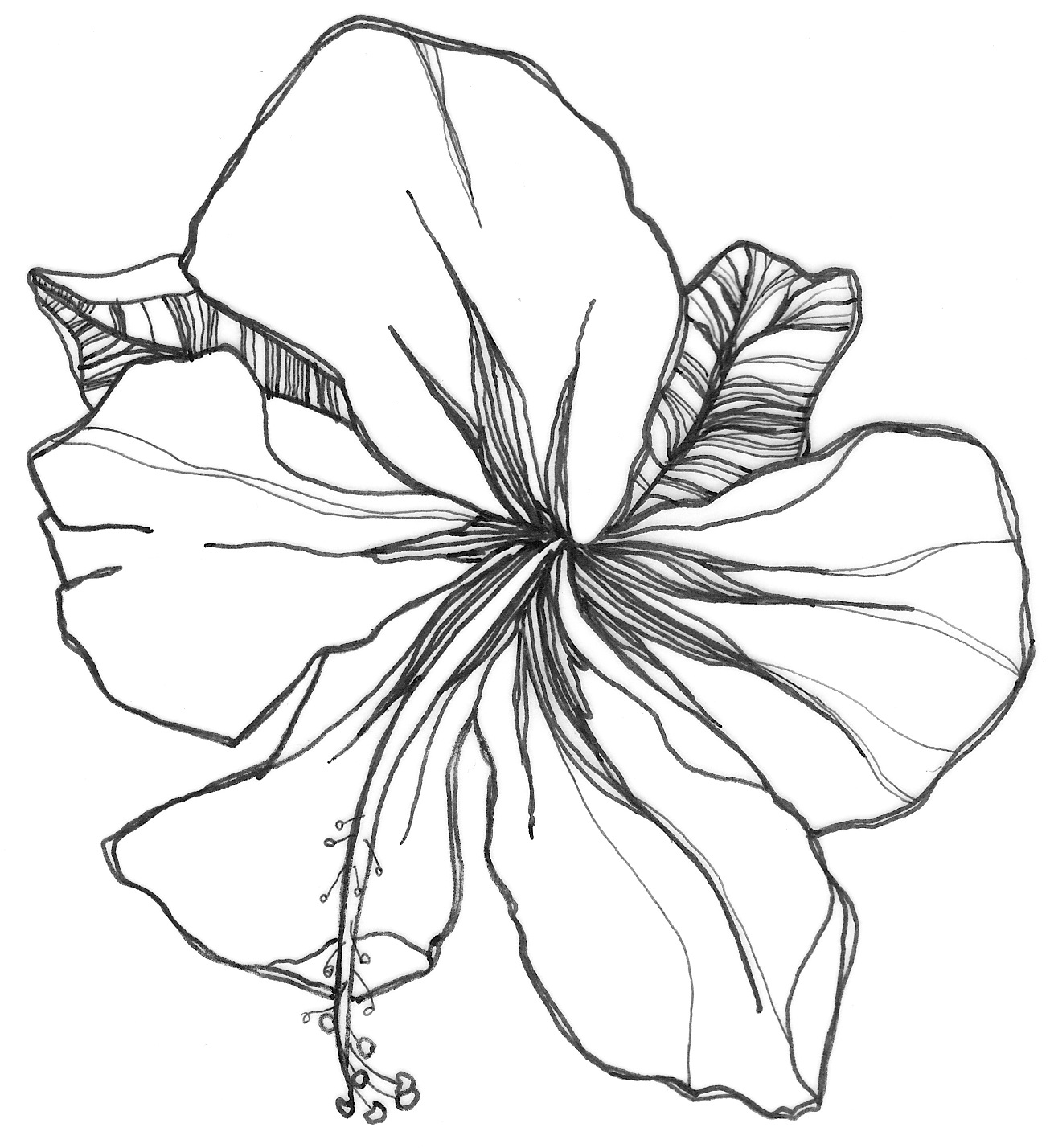 orchids drawings simple orchid drawing at paintingvalleycom explore drawings orchids