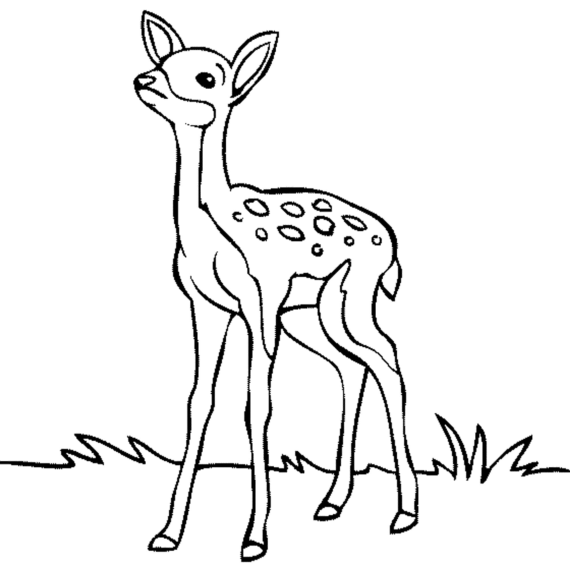 outline for coloring deer face coloring pages at getcoloringscom free coloring for outline