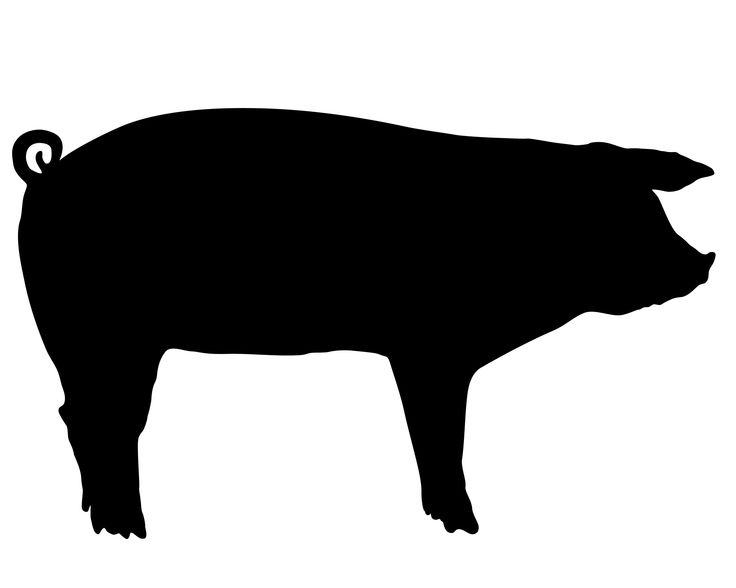 outline of a pig pig outline drawing at getdrawings free download a of outline pig
