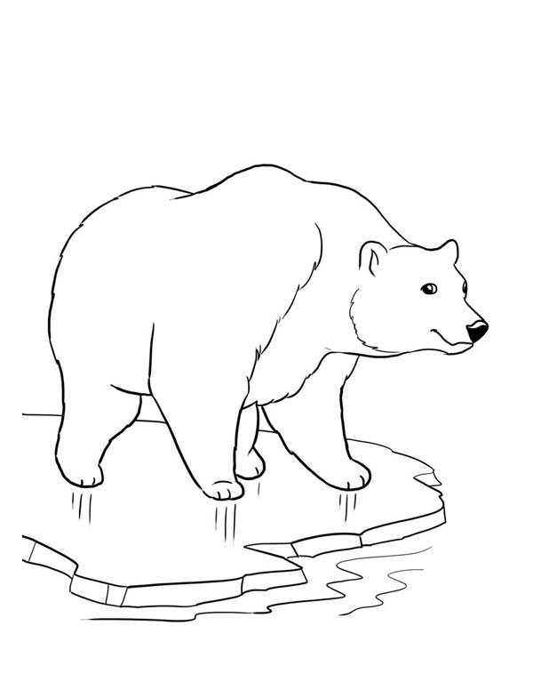 outline of a polar bear bear outline drawing at getdrawings free download of bear a polar outline