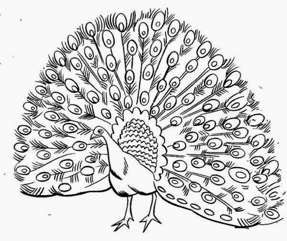 outline picture of a peacock peacock coloring pages getcoloringpagescom outline of a peacock picture