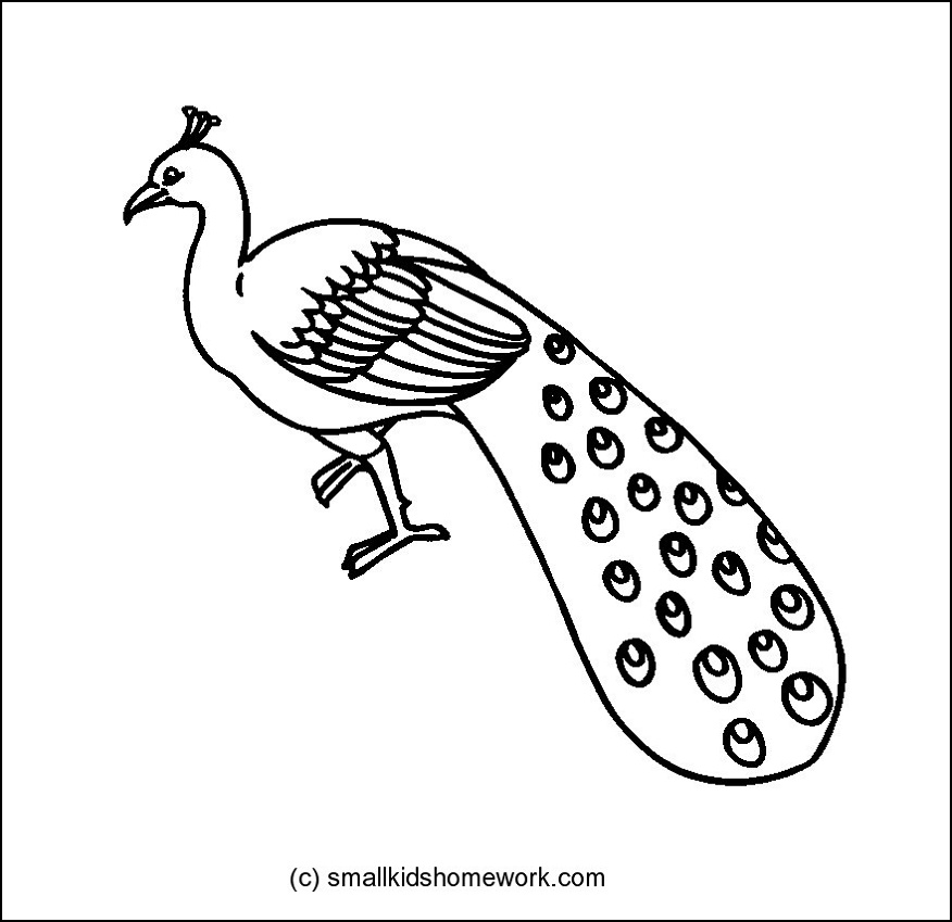 outline picture of a peacock peacock outline picture archives smallkidshomeworkcom picture of outline peacock a