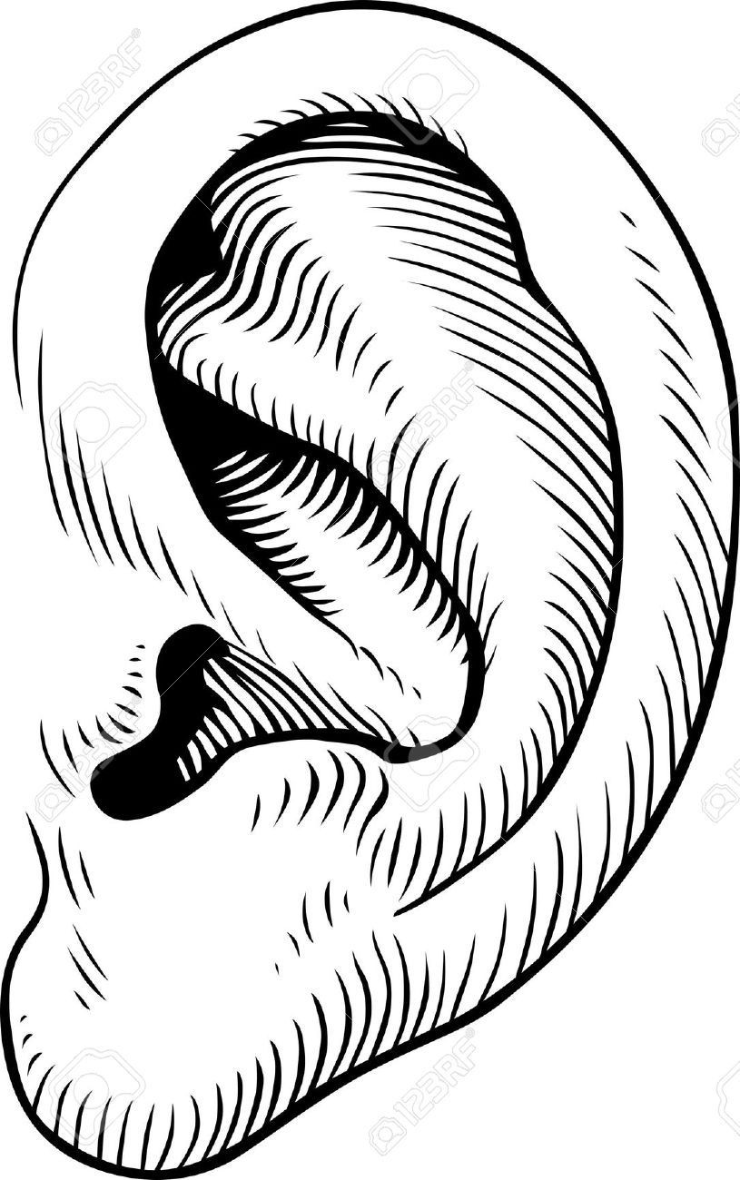 outline picture of ear triangle outline png 16935 transparentpng ear outline picture of