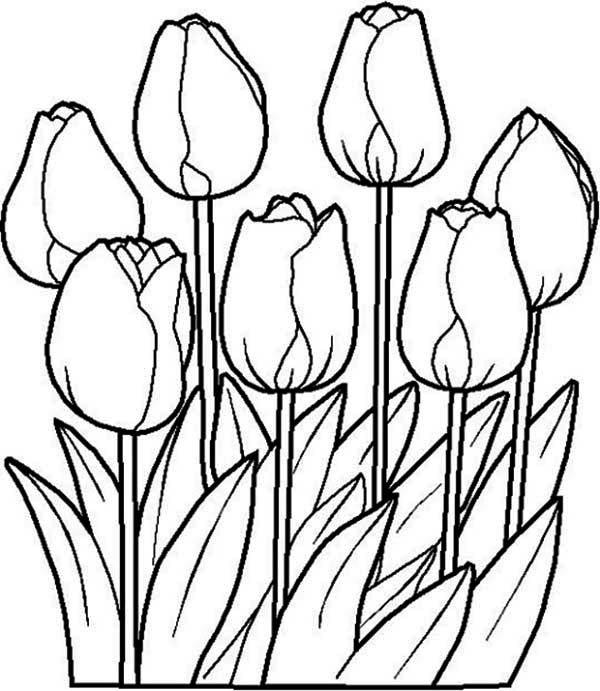 outline pictures of flowers for colouring beautiful tulip flower coloring page kids play color outline of colouring flowers pictures for