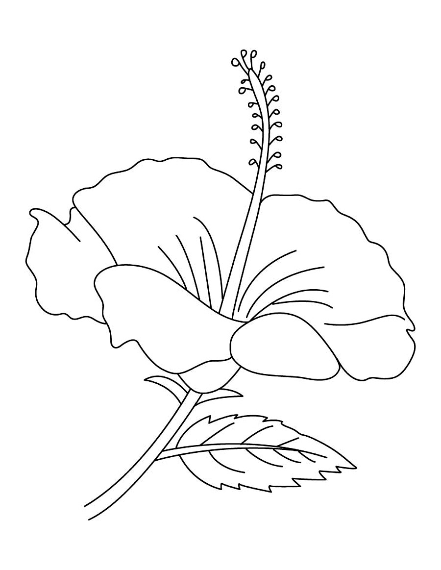 outline pictures of flowers for colouring free printable hibiscus coloring pages for kids of outline flowers for pictures colouring