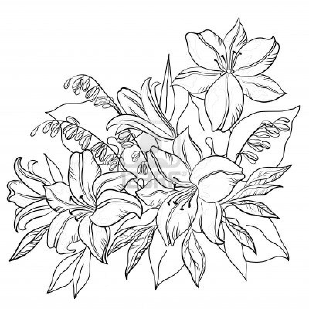 outline pictures of flowers for colouring lily flower drawing outline flower drawing coloring of outline for flowers colouring pictures